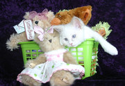 RAGDOLL KITTENS ++REGISTERED BREEDER++ LILAC MALES & FEMALES