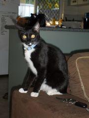 LOST Cat Mount Sheridan